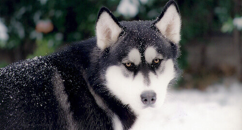 Le razze di cani più antiche della storia
