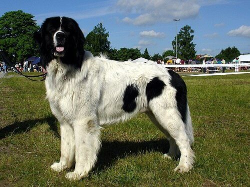 cane bianco e nero sul prato