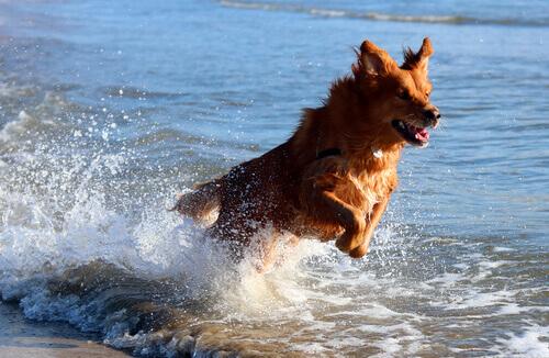 cane che salta in mare