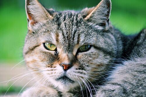 Se non vi piacciono i gatti è perché non li conoscete