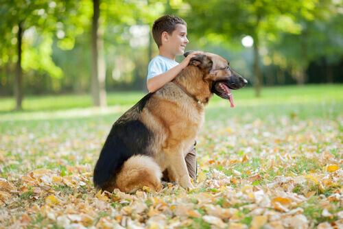 Conosciamo insieme le razze di cani più affettuose