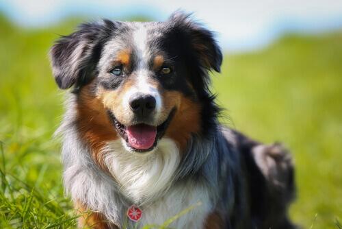 cane sul prato soffre di artrite
