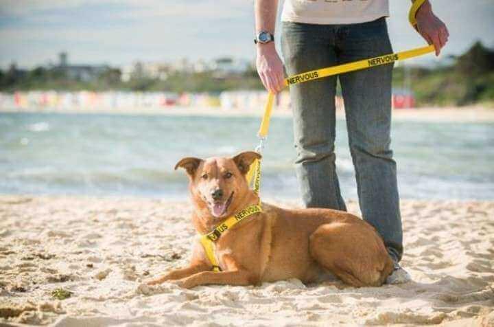 cane in spiaggia al guinzaglio