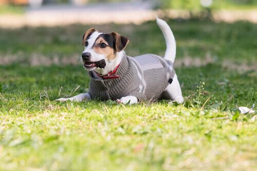 Cani e freddo: cure e consigli per evitare che ne soffrano