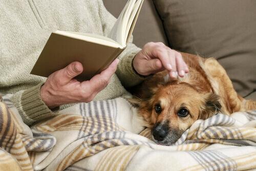uomo che legge a letto e cane