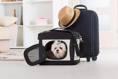 cane nel trasportino e valigia
