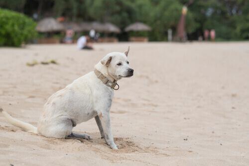 Tutto quello che c'è da sapere sull'epilessia nei cani