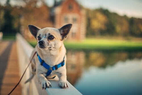cane seduto con fiume alle spalle