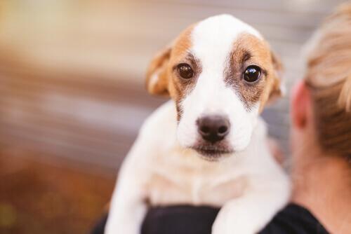 cane con leptospirosi in braccio a padrona
