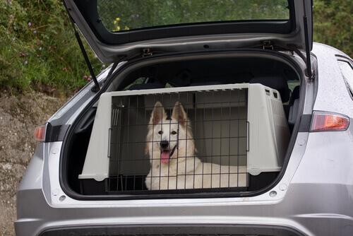 cane dentro il trasportino in macchina