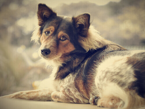 Liberatevi dalla solitudine: adottate un cane