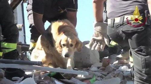 Cane salvato 9 giorni dopo un terremoto