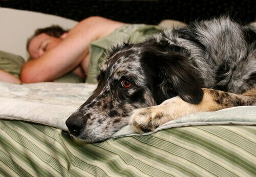 cane sul letto con padrone