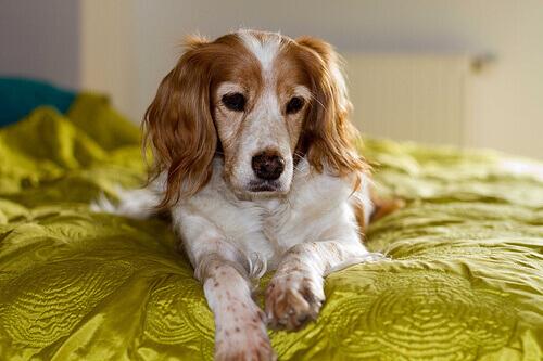 Perché i cani annusano le nostre parti intime?
