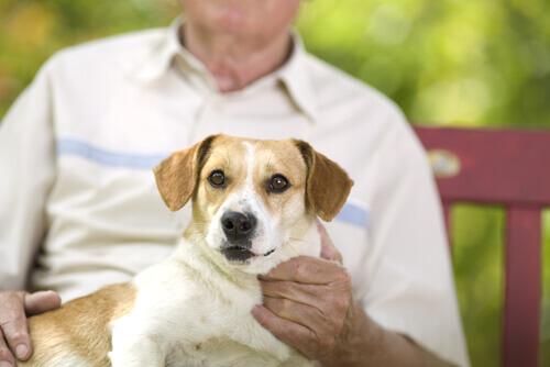 Cane in braccio al padrone