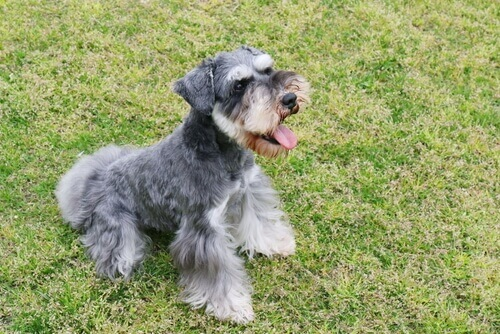 Cani del gruppo 2: classificazione delle razze secondo la FCI