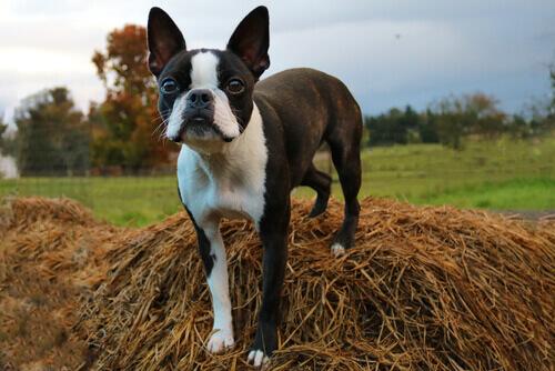Scoprite alcune razze di cani di moda