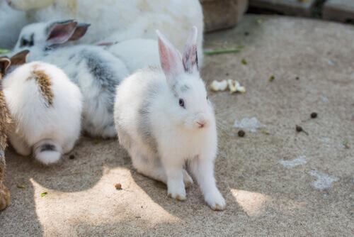 Conigli in casa: consigli sulla loro igiene