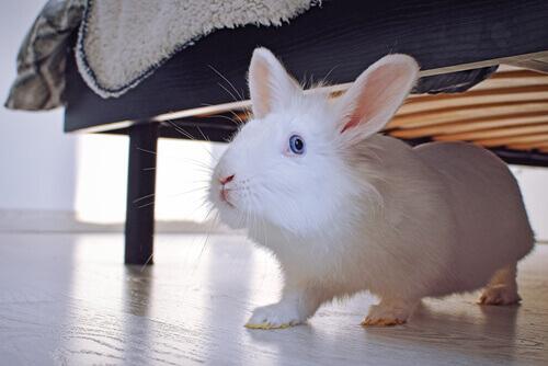 coniglio bianco sotto il letto