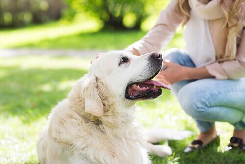 cane sul prato e donna che lo accarezza