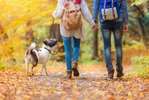 coppia nel bosco con cane al guinzaglio