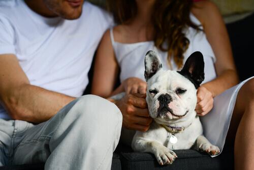 Coppia con cane sul divano