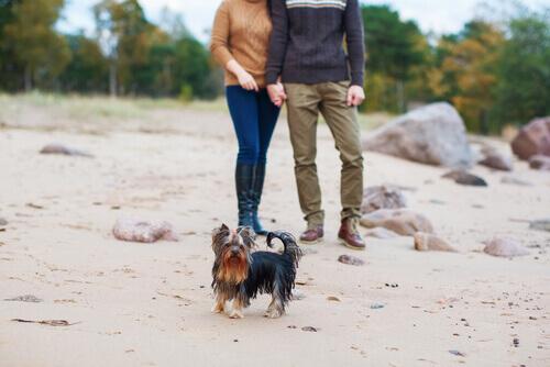 Coppia che fa una passeggiata in spiaggia con il cane