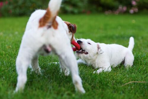 5 azioni che renderanno felice il vostro cane