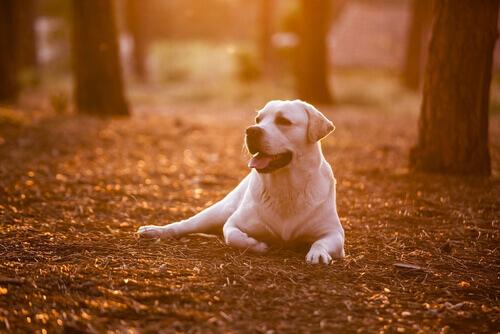 8 cose da imparare dal vostro cane