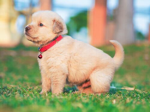 Il cimurro nei cani: di cosa si tratta?