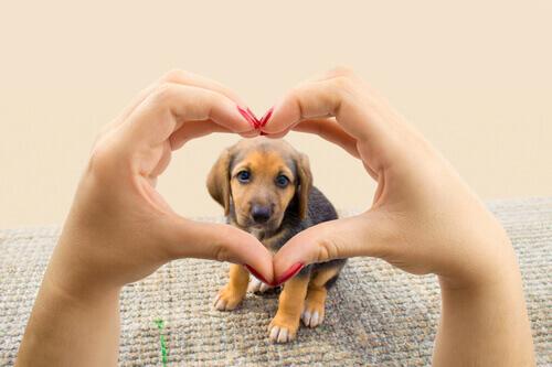 Unico obiettivo del vostro cane: donarvi il suo cuore
