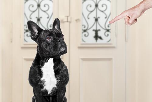 cane seduto e dito del padrone che lo indica