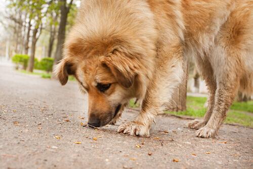 Evitare che il cane mangi per strada