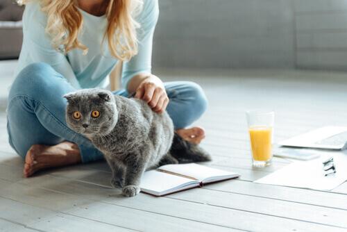 gatto con padrona in casa sul pavimento