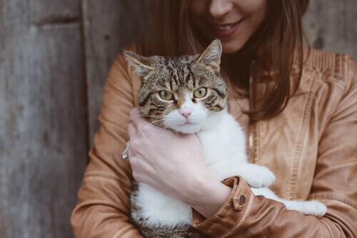 La toxoplasmosi nel gatto: di cosa si tratta?