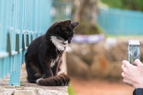Cosa fare affinché gli animali restino in posa per una foto