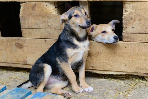 due cani in struttura di legno