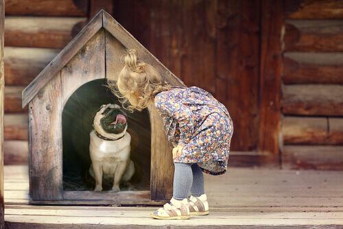 Si può maltrattare un cane incosciamente?