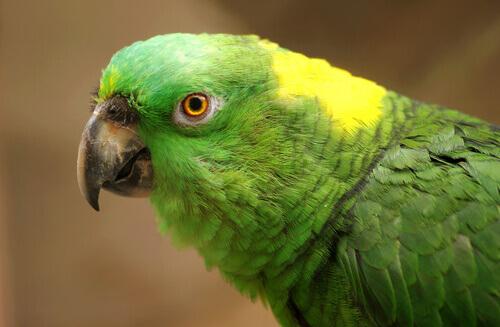 Depressione nei pappagalli: cause, sintomi e trattamento