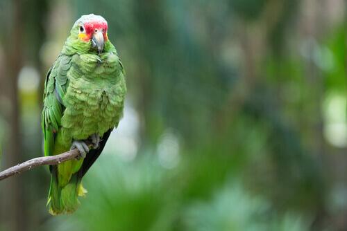 pappagallo verde su un ramo