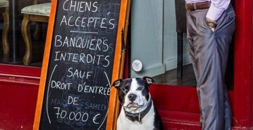 Ristorante parigino permette l'ingresso ai cani ma non ai banchieri