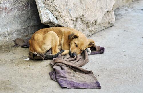 Statunitensi rischiano la propria vita per salvare gli animali