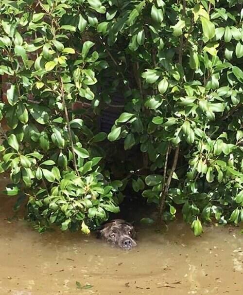 pitbull in acqua e piante