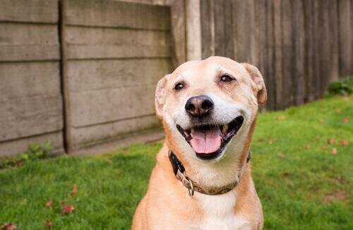Il sorriso di un cane si riflette su tutto il viso