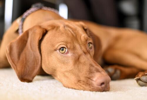 5 consigli per aiutare il cane a superare le paure