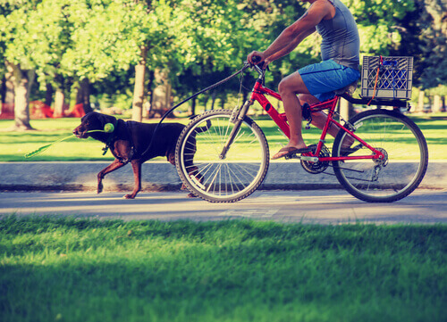 uomo in bicicletta con cane al guinzaglio