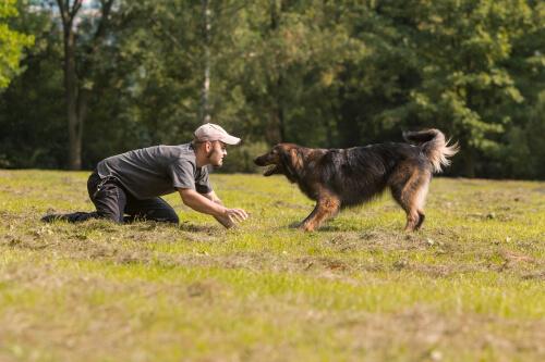 addestratore per terra e cane difronte a lui