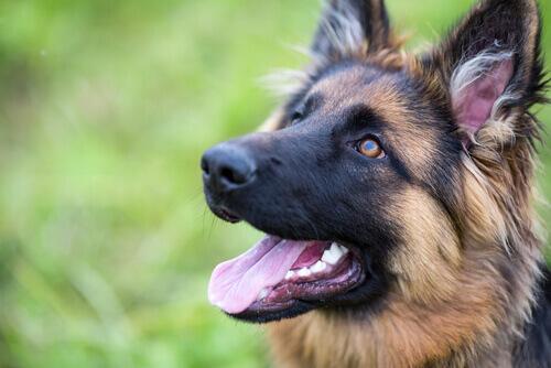 Potenziare l'autostima del vostro cane