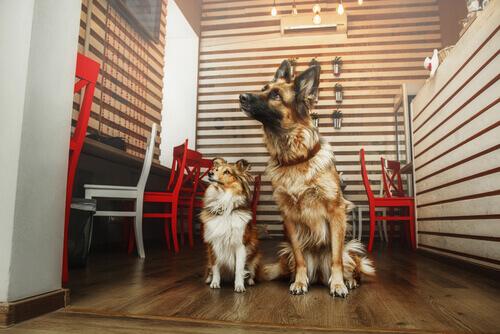 Un luogo in cui prendere il caffè, chiacchierare e adottare un cane