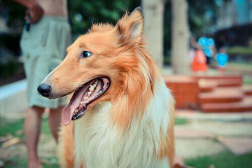 Sapete come calcolare l'età del cane?